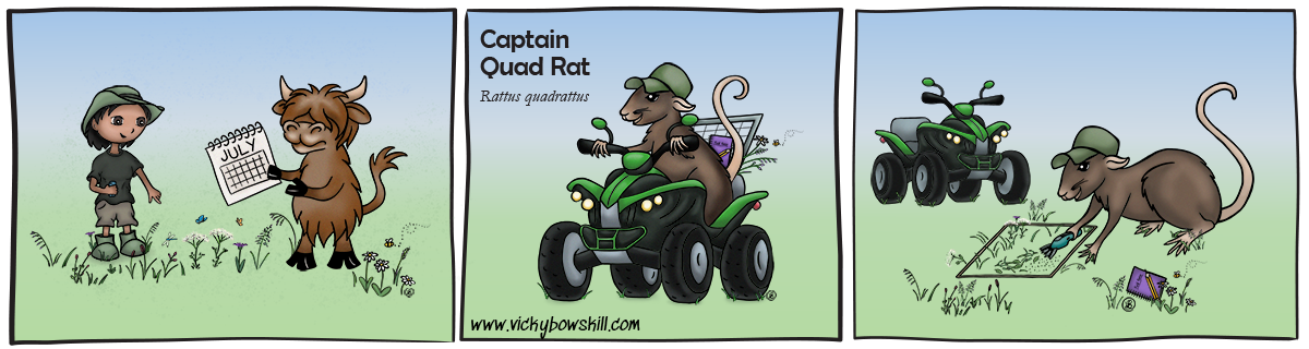 Cartoon strip with three panes. First: farmer and cow discuss meadow plants and a calendar. Second: Captain Quad Rat riding a quad with fieldwork equipment on the back. Third: Captain Quad Rat cuts hay samples in the meadow.