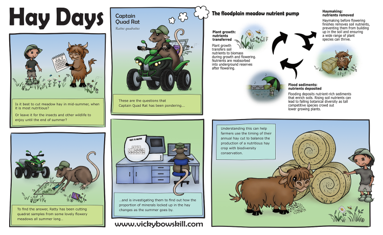 Cartoon with six frames explaining how understanding the meadow nutrient cycle can help make better hay.