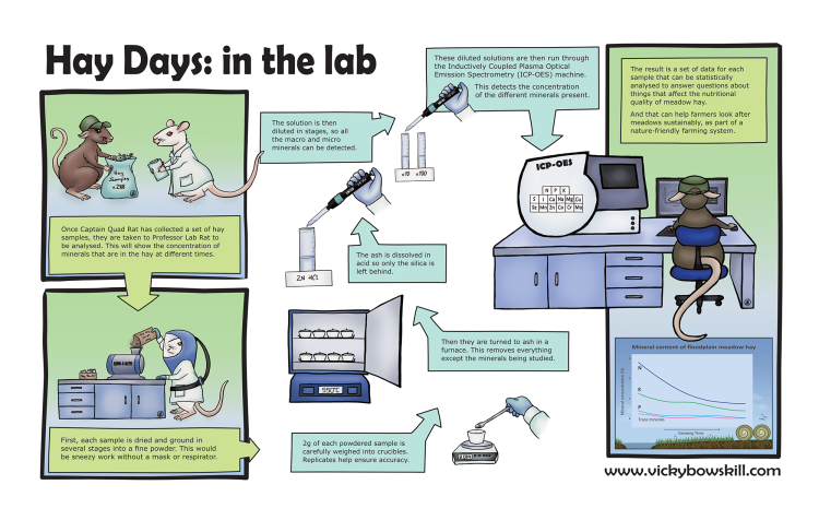Cartoon panel outlining lab methods used in Hay Days study