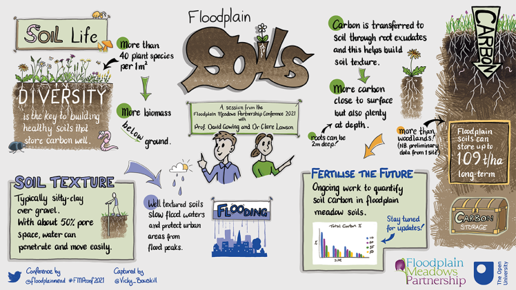 Visual summary about floodplain meadow soils